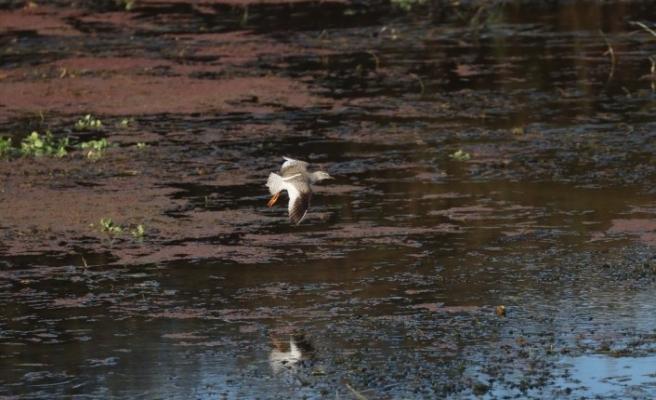 """""""Kuş dedektifi"""" 13 saatte 113 kuş türü fotoğrafladı, iddiaları çürüttü"""