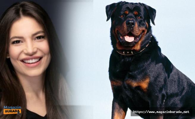 Oyuncu Hazal Erişkin'e Rottweiler Cinsi Köpek Saldırdı! 30 Dikiş...