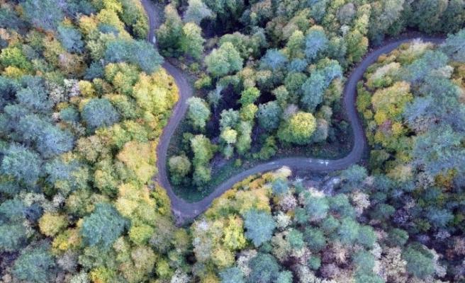Yenice ormanlarında sonbahar güzelliği