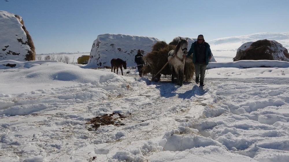 Muş'ta besicilerin kış mevsiminde en büyük destekçileri atlı kızaklar