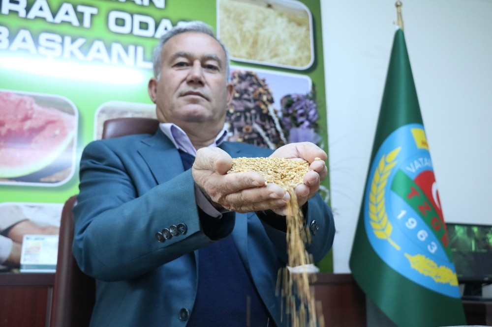 (Özel) İtalyan makarnasına buğday Gaziantep'ten
