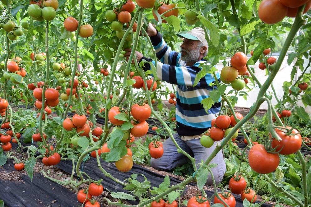 Domates fiyatında düşüş, meyvede rekor artış yaşanıyor