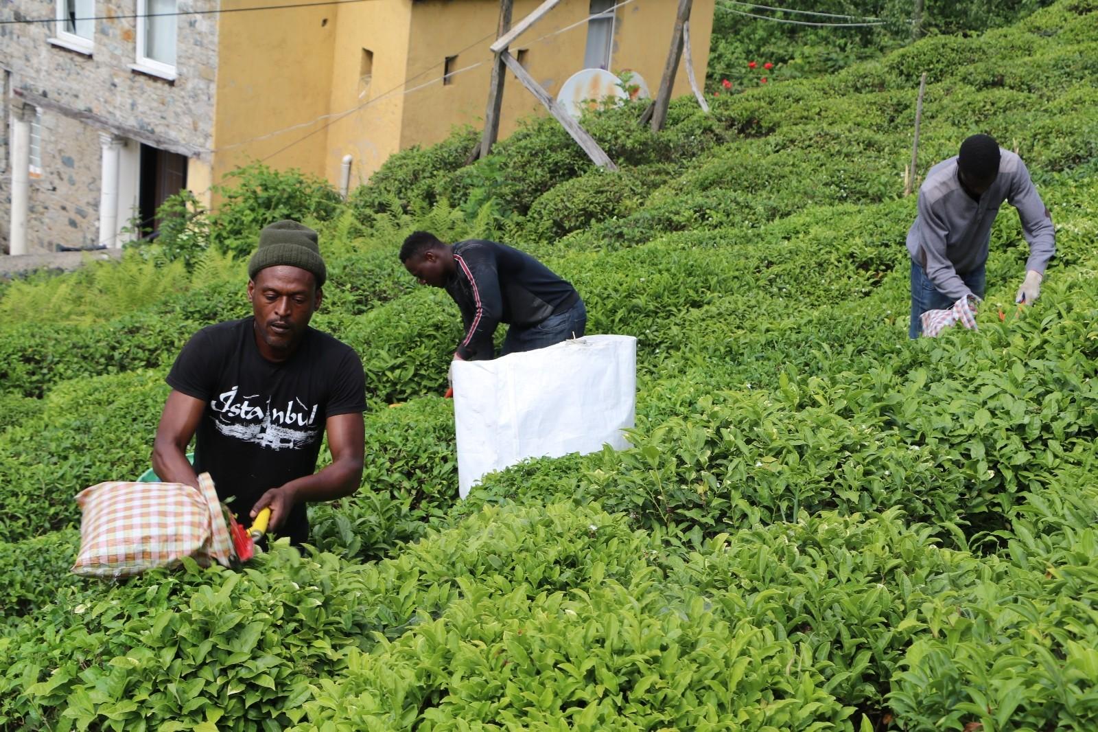 Bu yıl da çay bahçeleri Birleşmiş Milletleri andıracak