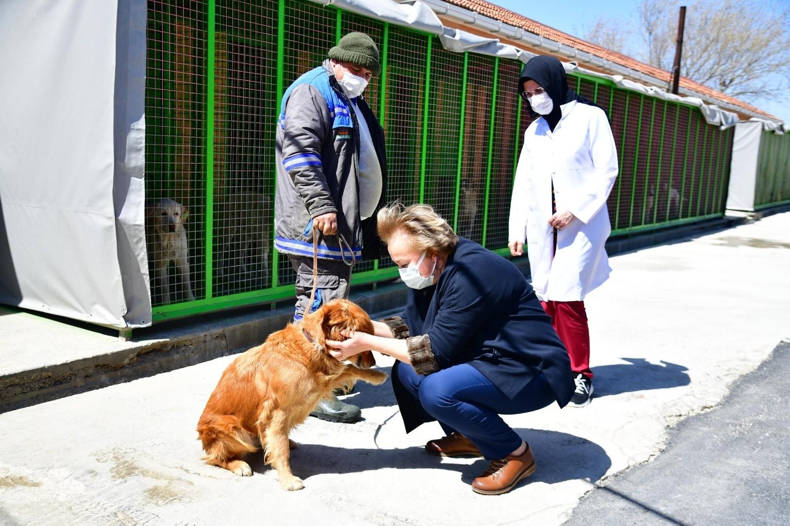 Mamak Belediyesinden sokak hayvanları için örnek bir çalışma daha