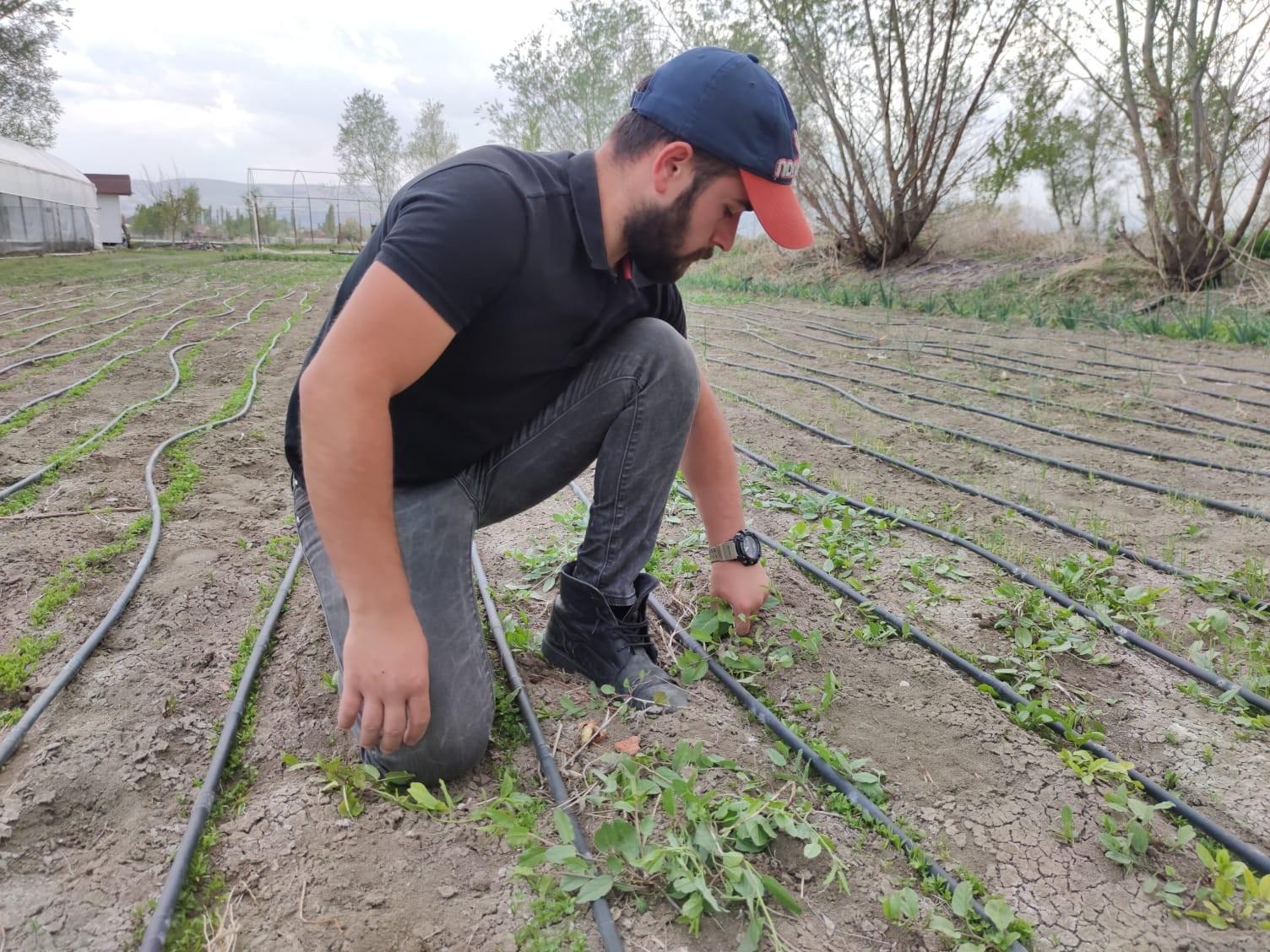 Amasyalı genç çiftçinin seracılık merakı, hayatının dönüm noktası oldu