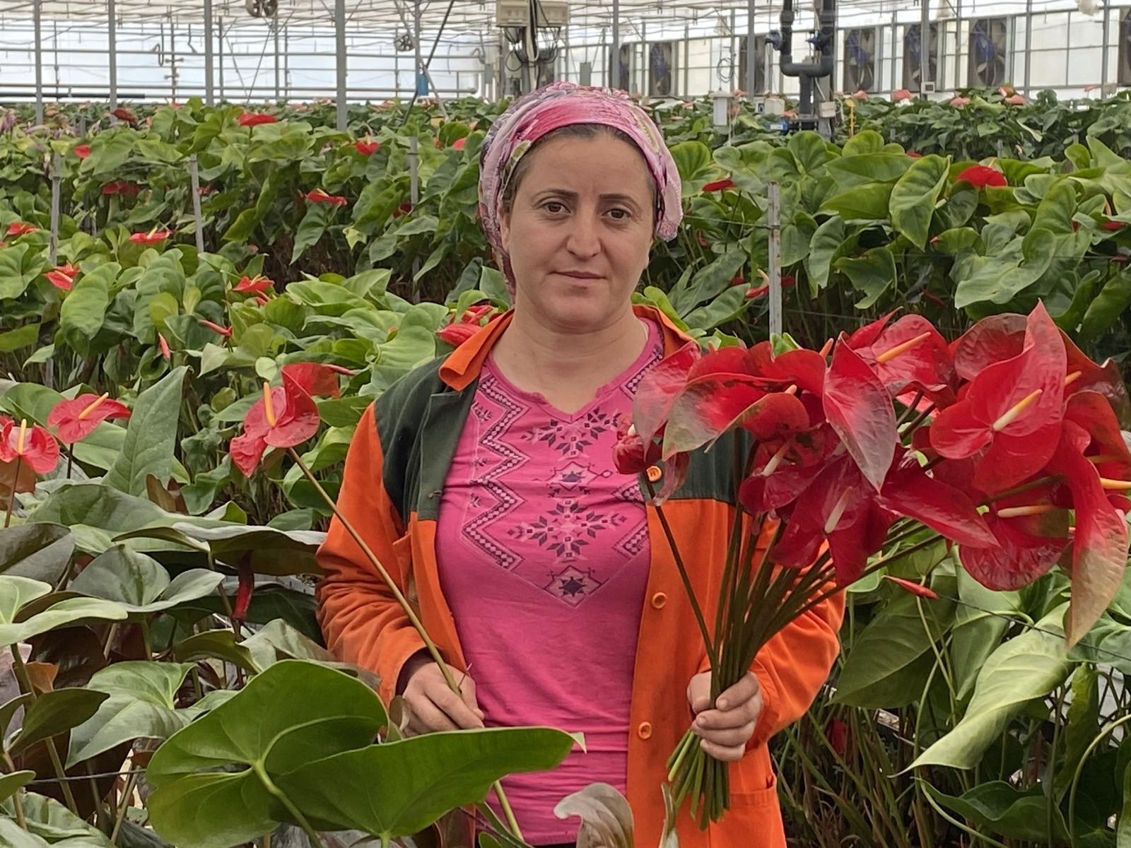 (Özel) Topraksız tarımın en uzun ömürlü çiçeği Antalya'dan Avrupa ülkelerine gönderiliyor